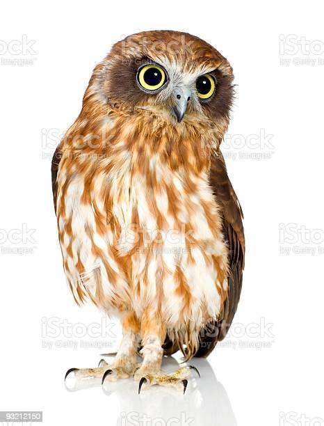 Portrait of a new zealand owl picture id93212150?b=1&k=6&m=93212150&s=612x612&h=uur9wi078ghqfaoakd536iu82xo1cdwno4qa1scjgly=
