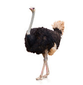 istock Portrait Of A Ostrich 178424685