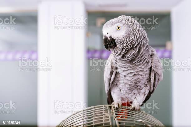 Portrait of a parrot bird picture id814989284?b=1&k=6&m=814989284&s=612x612&h=rmvq0xxzmauywp2m pnchwqddudxphwpcix0eott42o=
