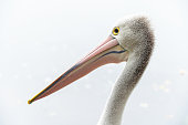 background textured wallpaper inspiration design Australia Australian animal bird