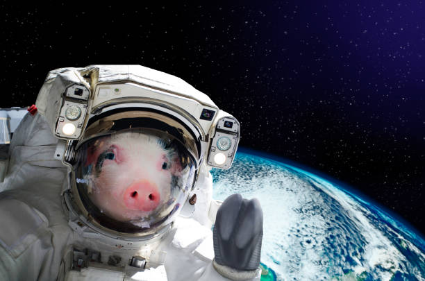 Portrait of a pig astronaut in space on background of the globe stock photo