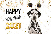 Portrait of a pretty dalmatian dog wearing a new year diadem on a white background with golden party garlands and text happy new year 2021