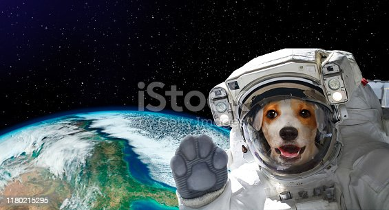 istock Portrait of a pretty dog astronaut in space on background of the globe. Elements of this image furnished by NASA 1180215295