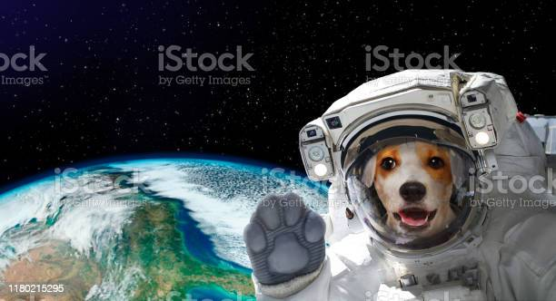 Portrait of a pretty dog astronaut in space on background of the of picture id1180215295?b=1&k=6&m=1180215295&s=612x612&h=xopphqerhqbdkzxufyjcbvy g7hjc6xeivy7xq3xink=