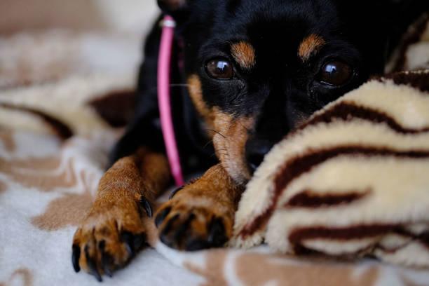 ritratto di un cucciolo - foto stock
