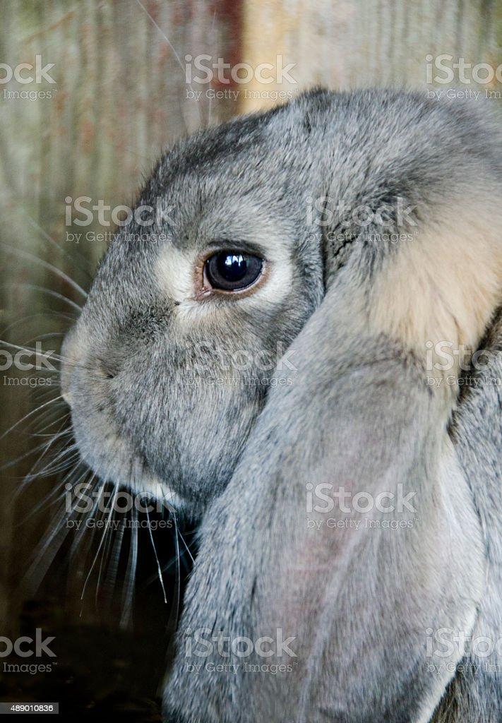 Portrait of a rabbit, close up stock photo