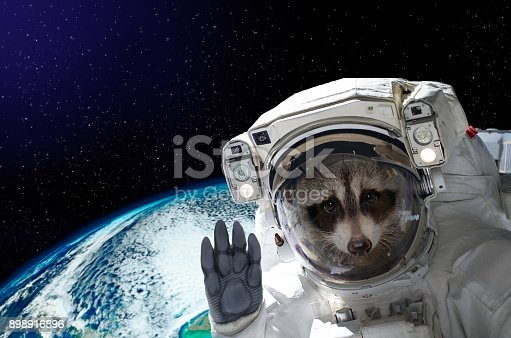 istock Portrait of a raccoon astronaut in space on background of the globe 898916896
