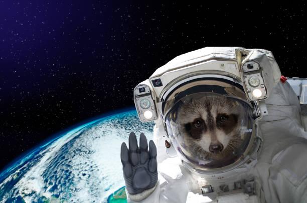 Portrait d'un astronaute de raton laveur dans l'espace sur fond du globe - Photo