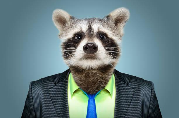 Portrait d'un raton laveur dans un costume d'affaires - Photo