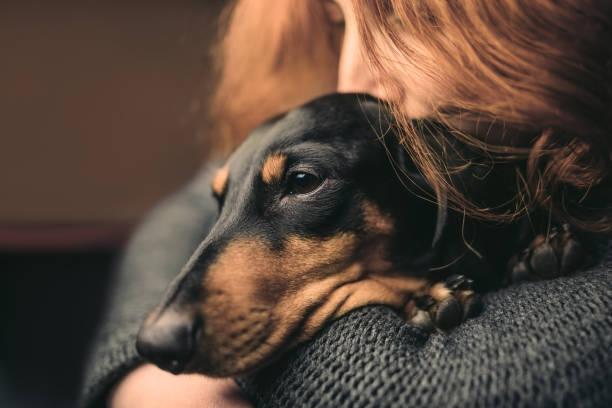 portrait d'une femme aux cheveux roux qui embrasse un chien noir somnolent, duchshund. - femme seule s'enlacer photos et images de collection