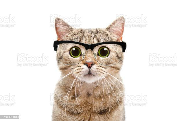 Portrait of a scottish straight cat with glasses picture id926092800?b=1&k=6&m=926092800&s=612x612&h=lzh6y0fzryr0vgngc86abofgd68xbogjpsgff 2gdgm=