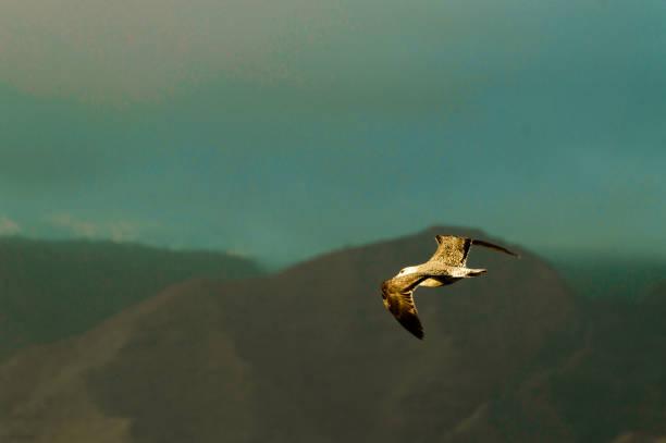 Porträt einer Möwe, die am Strand von Las Americas überfliegt. – Foto