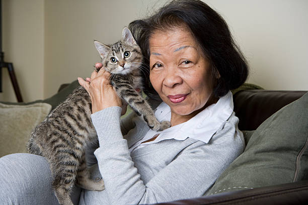 Portrait of a Senior Elderly woman holding a Kitten stock photo