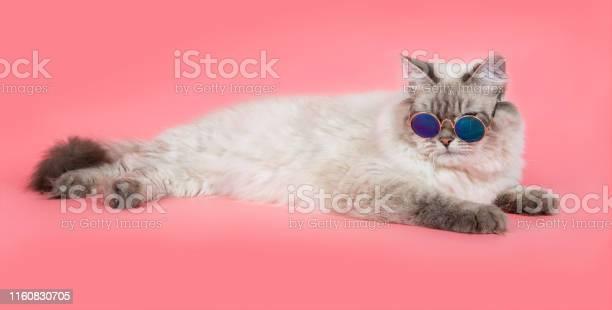 Portrait of a siberian kitten picture id1160830705?b=1&k=6&m=1160830705&s=612x612&h=isyrd3ixrmzerdfof3cozz9fopq4zqiennnvimumfkm=