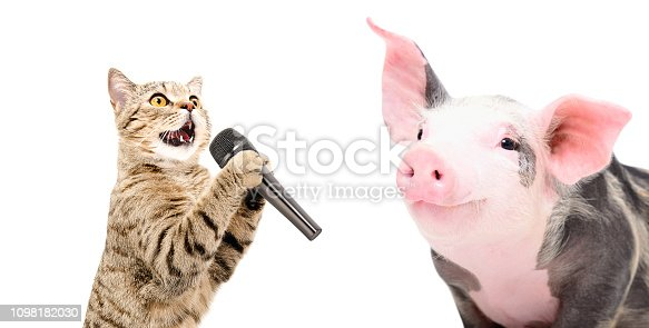 Portrait of a singing cat and piglet, isolated on white background