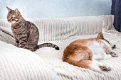 istock Portrait of a sleeping dog and a cat sitting next to her. Concept of friendship of a cat and dog 1254000970