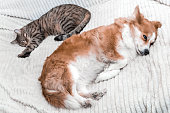 istock Portrait of a sleeping dog and a cat together on the bed close-up 1254001504