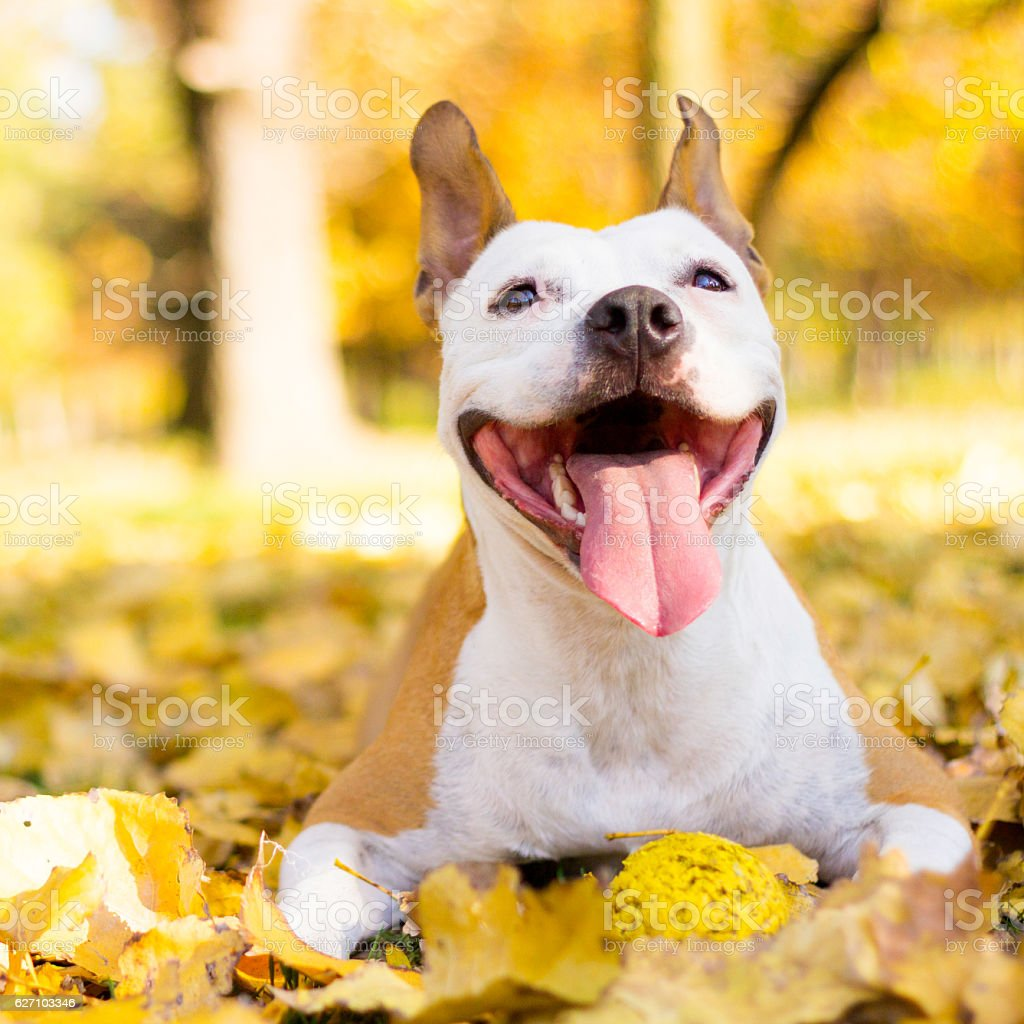 Portrait of a smiling dog stock photo