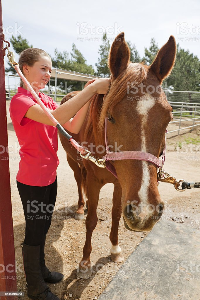Portrait of a teenage girl grooming her horse stock photo