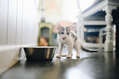 Cute little kitten in a domestic home explores its environment