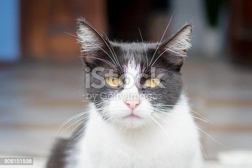 626958754 istock photo Portrait of a very sad cat sitting on the street 926151538