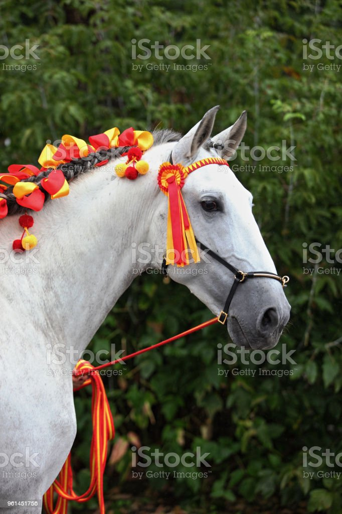 Portrait of a white andalusian warmblood horse stock photo