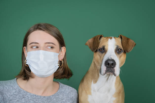 Portrait of a woman blowing her nose in a napkin and looking at her dog. stock photo