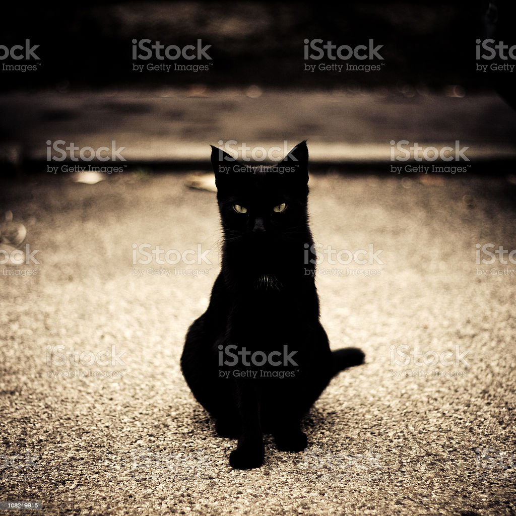 Portrait of a young black cat stock photo