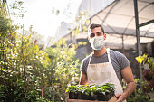 Portrait of a young florist holding a box full of seedlings using protective mask