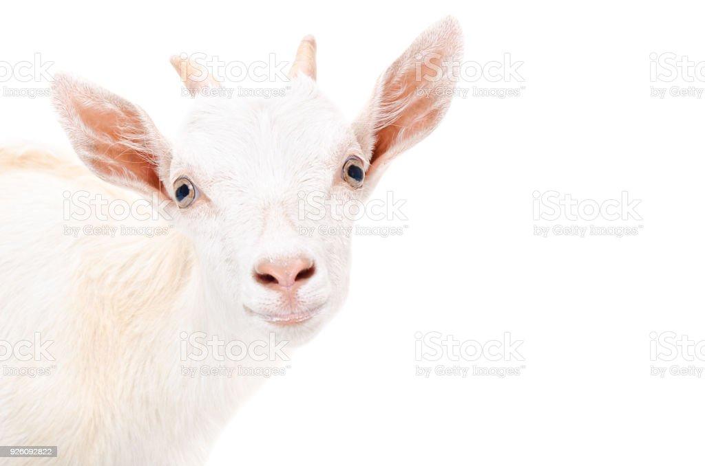 Portrait of a young goat closeup stock photo