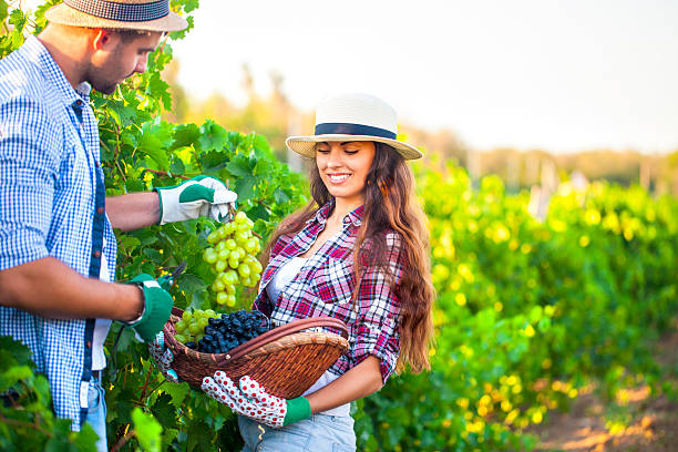 Best Farm Sex Stock Photos, Pictures & Royalty-Free Images