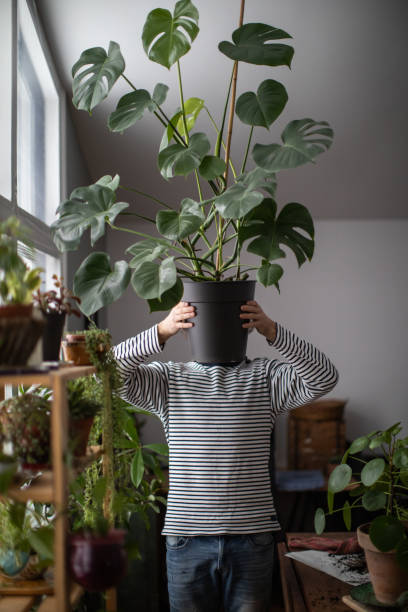 Portrait Of A Young Indoors Gardener Holding Cheese Plant stock photo