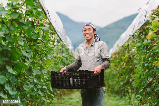 istock Portrait of a young Japanese grape farmer in his vineyard 855450864
