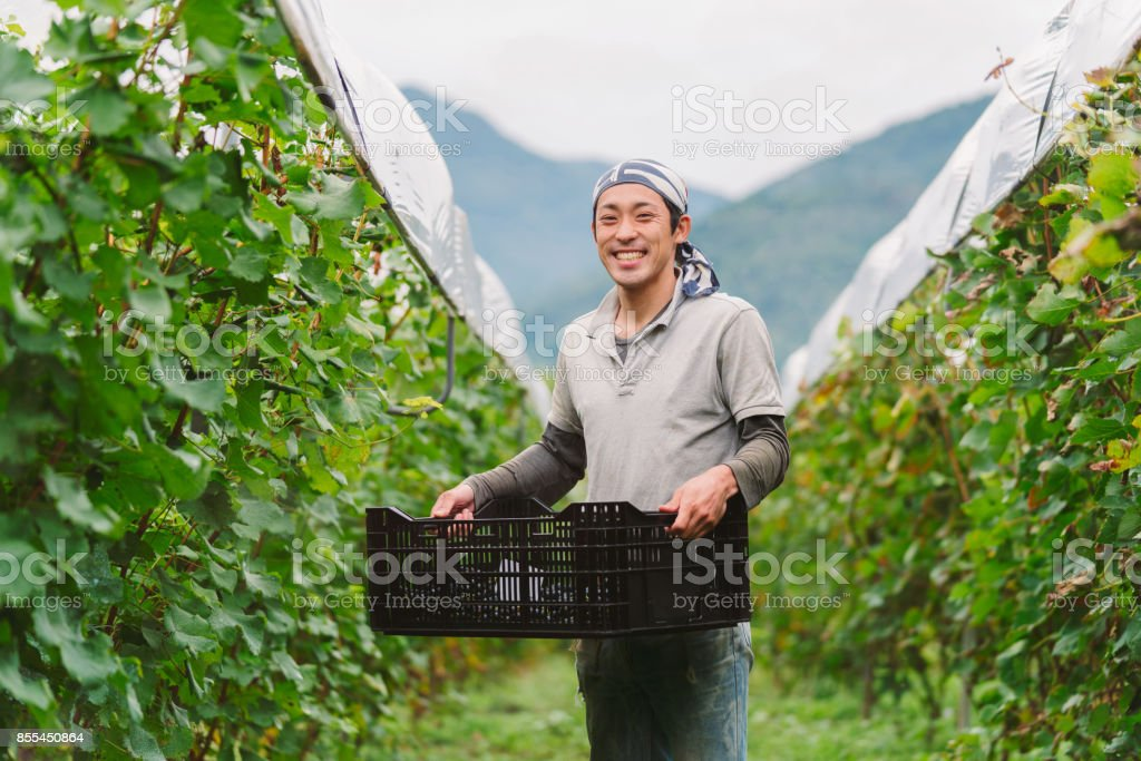 Portrait of a young Japanese grape farmer in his vineyard stock photo