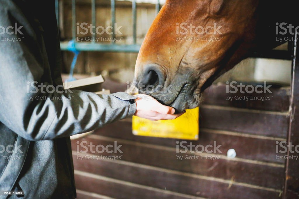 Portrait of a young man with horse stock photo
