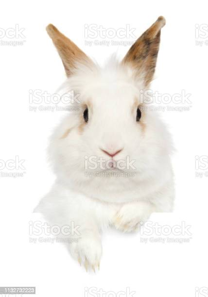Portrait of a young rabbit above banner picture id1132732223?b=1&k=6&m=1132732223&s=612x612&h=gugvwdiiznjf3oy9nkjc8sfokskrgadhrixwkiasftg=