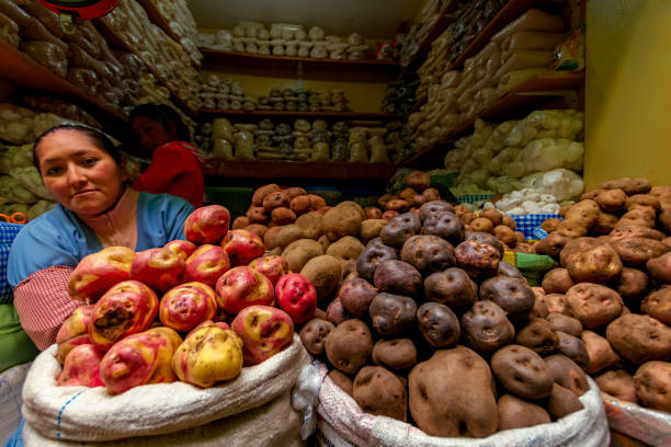 Portrait of a young woman sitting among potatoes at her stall in Puno local market stock photo