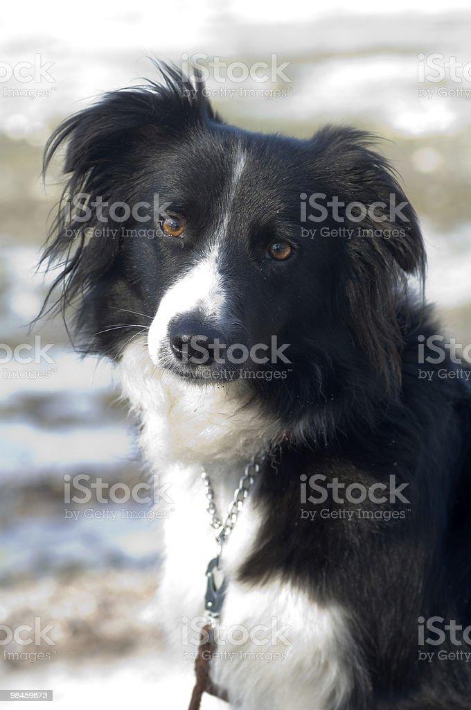 portrait of acute dog royalty-free stock photo