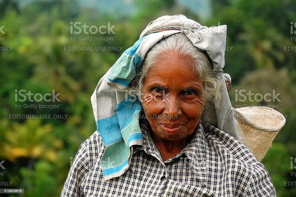 Portrait of Aged Tamil Tea Picker stock photo