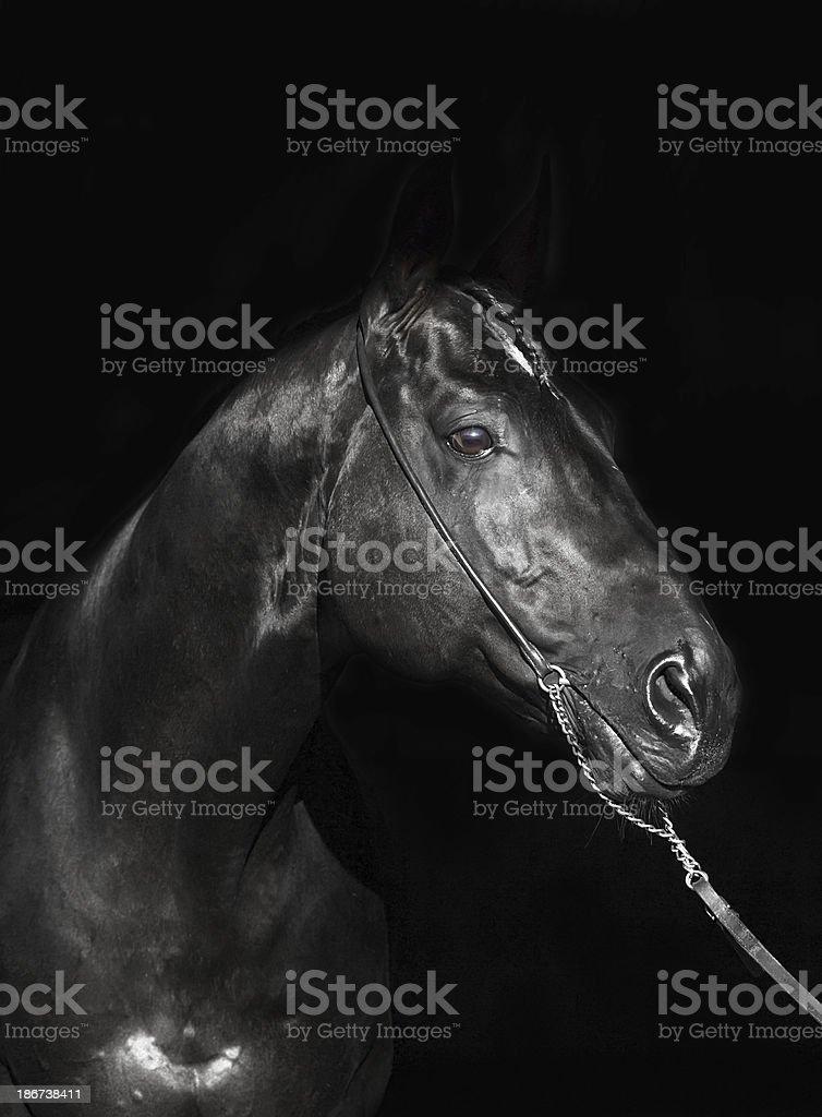 Portrait Of Amazing Black Horse On Dark Background Stock Photo Download Image Now Istock