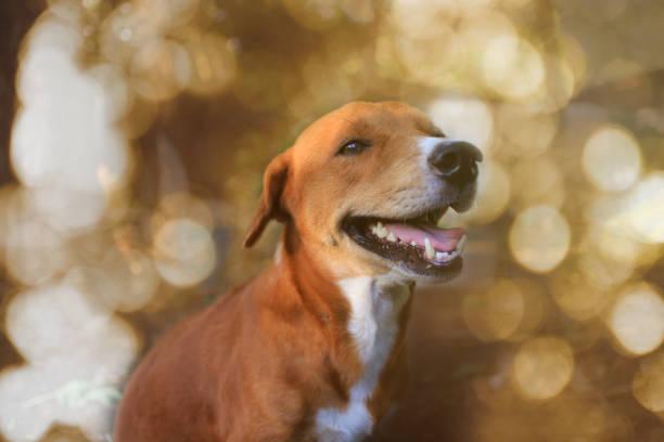 Portret van een schattig bruine hond buiten. foto