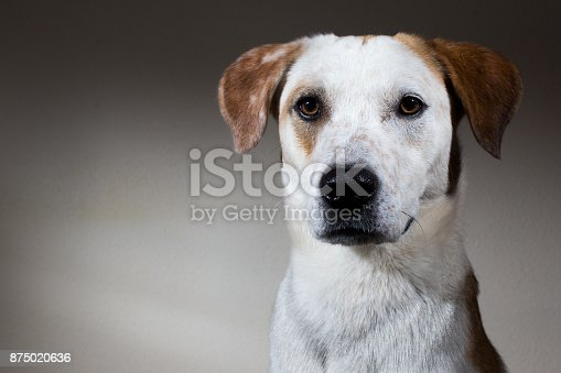 Portrait of an adorable mixed breed dog, looking at camera