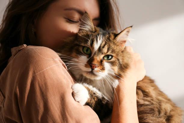 Portrait of beautiful and fluffy tri colored tabby cat at home light picture id1198100351?b=1&k=6&m=1198100351&s=612x612&w=0&h=gmrkgummnciog4xazwyvpqgpfiatujnswlapy8esxag=