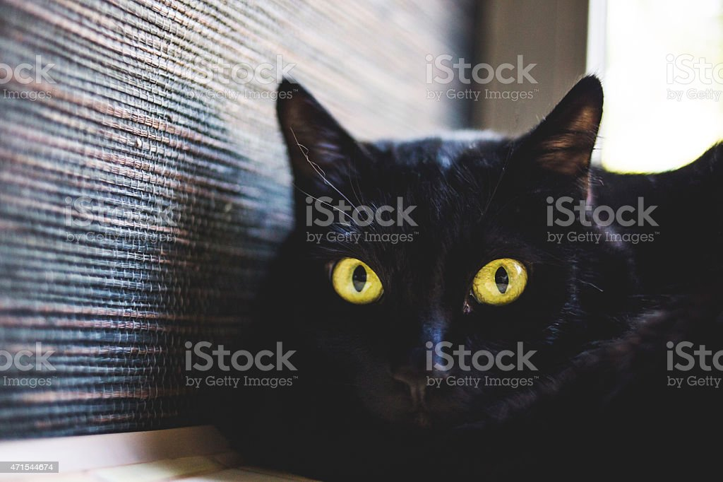 Portrait of beautiful black cat with yellow eyes stock photo
