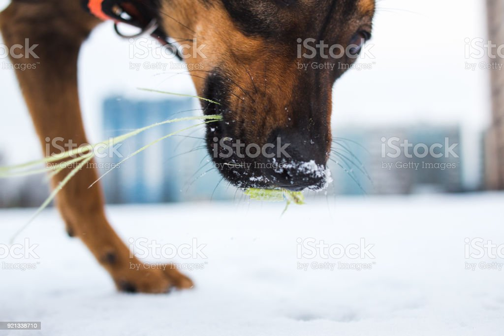 Portrait of beautiful black dog, looking aside, sitting in a meadow stock photo