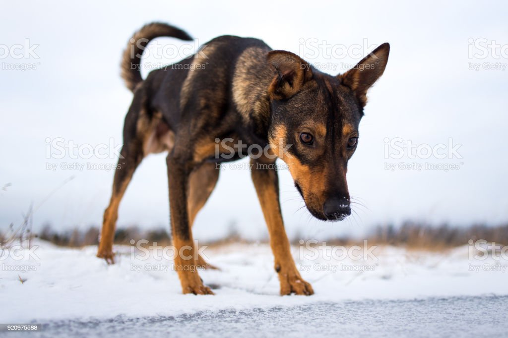 Portrait of beautiful dog, looking down, in winter stock photo