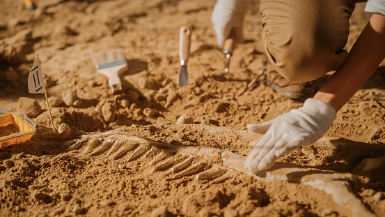 Portrait of Beautiful Paleontologist Cleaning Tyrannosaurus Dinosaur Skeleton with Brushes. Archeologists Discover Fossil Remains of New Predator Species. Archeological Excavation Digging Site