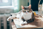 Portrait of beautiful tabby cat in sun rays in home