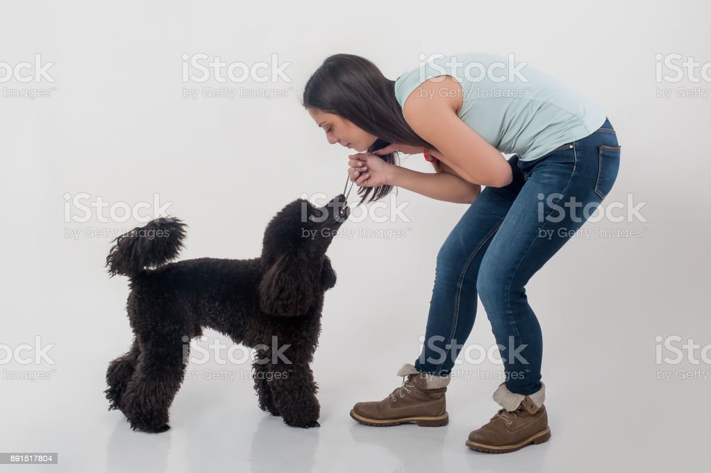 Portrait of beautiful young woman playing with her beautiful dog stock photo