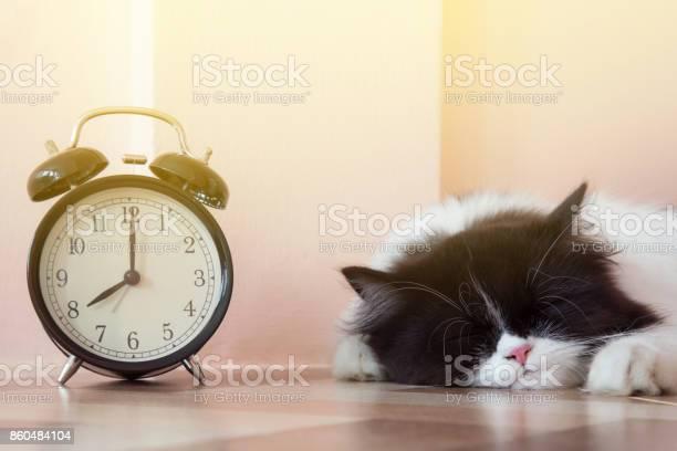 Portrait of black and white persian kitty cat sleeping near vintage picture id860484104?b=1&k=6&m=860484104&s=612x612&h=k3njot73opryqab1rianq0vwu8buyzmvhvkqiyz01ga=